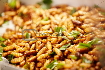 Fried silk worm larvae
