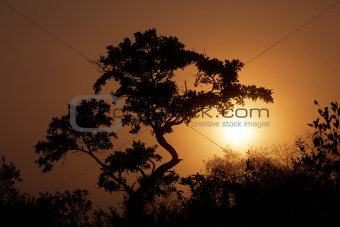 Savanna sunrise