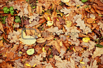 Natural background: yellow and orange dry leaves