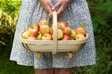 woman with fresh apples in a wooden trug