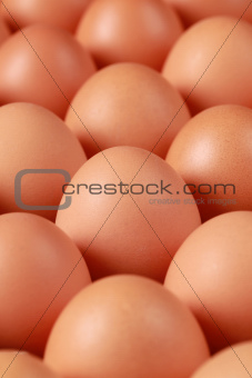 Brown eggs in a row