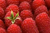 Perfect Ripe Raspberries Background