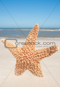 Starfish Standing In The Sand
