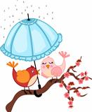 Birds lovers to rain