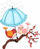 Birds lovers to rain