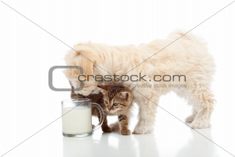 Cat and dog feeding together