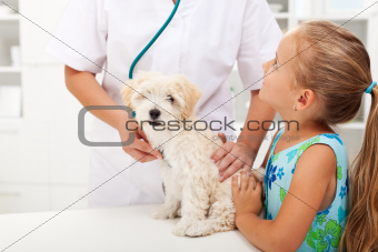 Little girl and her fluffy pet at the vet