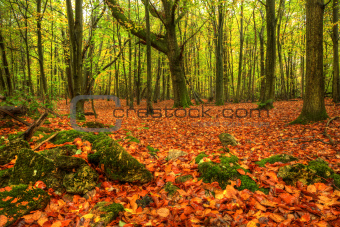 Stunning bright Autumn Fall forest landscape vibrant colors