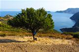 Lonely tree and the sea