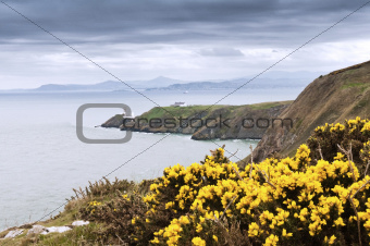 Yellow flowers and the lighthouse - Ireland