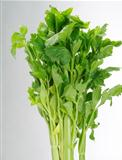 stalk of celery on white background