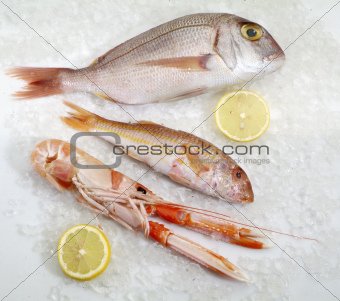 three fresh fish