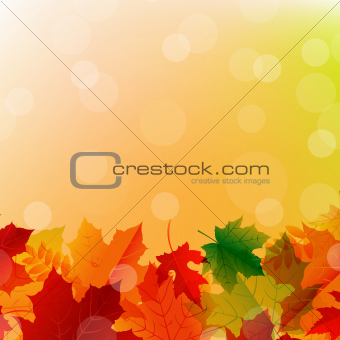 Arrangement Of Autumn Leaves