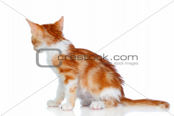 Small cat seen from behind