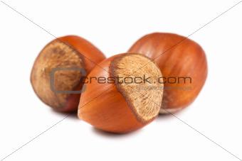 Three ripe hazelnuts