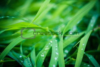 Water drops on the fresh green grass