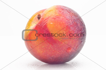 Bright ripe plum