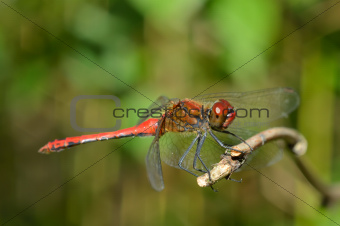 Bright dragonfly