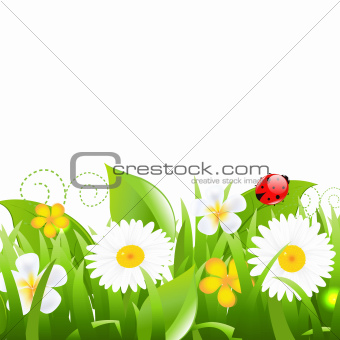 Flowers With Grass Leafs And Ladybug