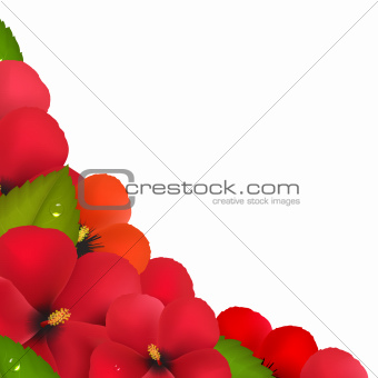 Red Hibiscus Flowers With Leaf Border