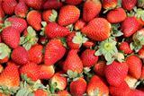 ripe berries of strawberry