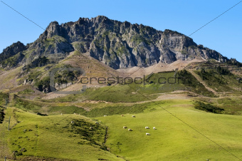 green meadows in the French Pyrenees