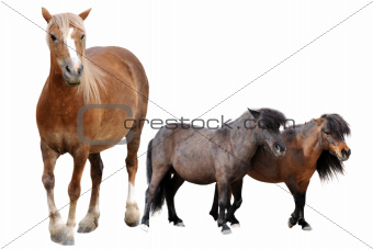 horse and ponies