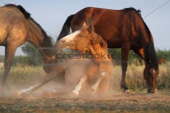 Horse lying
