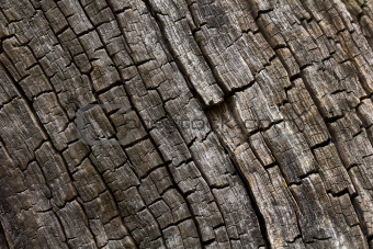 Burnt wood texture.