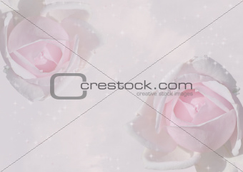 Sparkling pink roses background