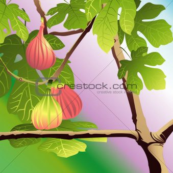 Three Red Figs