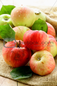 fresh autumn  apples with leaves on wooden background