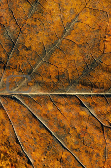 Autumn color leaf textures and details background.