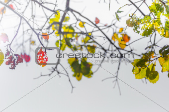 green leaves and tree branches