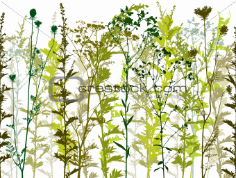 Natural wild plants and weeds silhouettes set .
