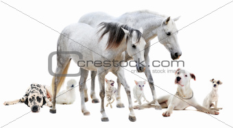 group of white pet