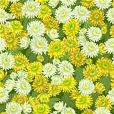 Seamless yellow white chrysanthemum flowers pattern