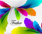 Vector colorful feather background