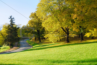 Autumn Morning in Park