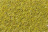 Mung bean