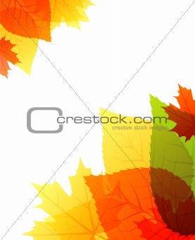 Vector illustration of back autumn leafs
