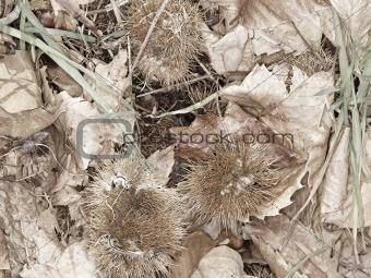 forest floor detail in autumn