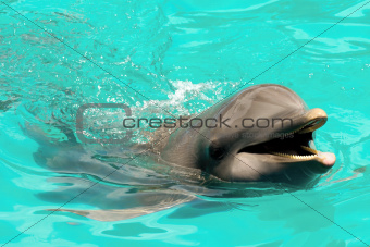 Happy smiling dolphin