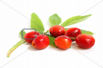 Fresh rose hips with leaves