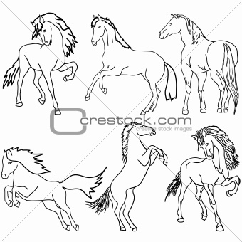 Vector set. Black horse silhouette isolated on white for design.