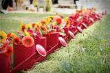 Watering cans with a row of red gerberas immediacy as an allegory of life