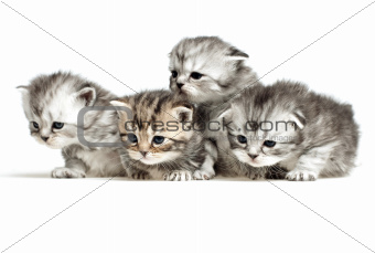 Four little kitten