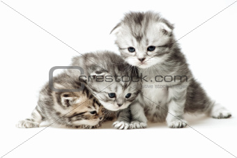 Three little kitten