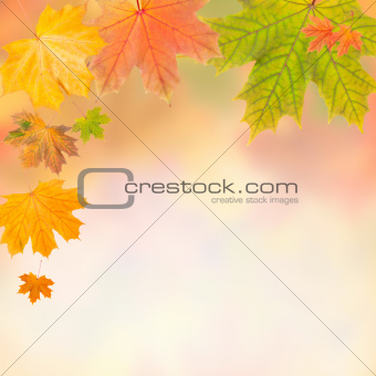 Colorful autumn frame