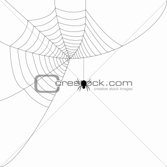 A spiders web with a black spider on it